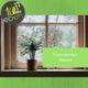 davanzale-pianta-finestra